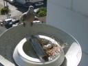 鳩と巣とタマゴ